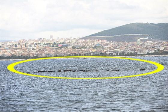 İstanbul'un Kayıp Adası (Vordonosi)